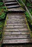Wooden stairs. Wood stairs in forest with some moss royalty free stock photography