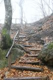 Wooden stairs. In rainy forest Stock Photos