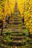 Wooden stairs in Alsace vineyards in autumn, vertical view Stock Photo