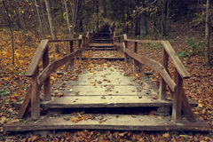 Wooden stairs in autumn forest Stock Image