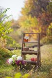 Wooden stairs in the autumn park in nature, on the stairs cookies, apples, honey royalty free stock images