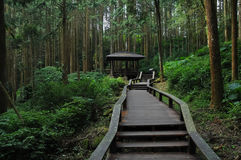 Wooden stairs climbing steps in deep forest Stock Photo