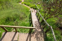 Wooden stairs into the forest on Jaragua Peak, Brazil stock photo