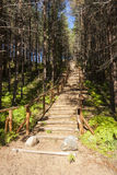 Wooden stairs in forest Royalty Free Stock Photo