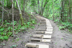 Wooden stairs in the forest. Sigulda. Royalty Free Stock Photo