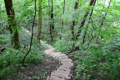 Wooden stairs in the forest. Sigulda. Royalty Free Stock Photos