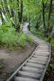 Wooden stairs in green bushes Stock Photo