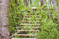 Wooden stairs in the green forest park Stock Images