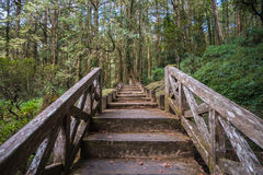 Wooden stairs have difficult obstacles to walk up. Wooden stairs have difficult obstacles to walk up, The front is a wilderness destination Royalty Free Stock Images
