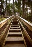 Wooden stairs  at Kitsumkalum Provincial Park. Canada Royalty Free Stock Photos