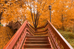 Wooden stairs with leaves in the autumn forest Stock Photography
