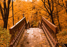 Wooden stairs with leaves in the autumn forest Royalty Free Stock Image