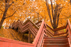 Wooden stairs with leaves in the autumn forest Stock Photos