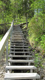 Wooden stairs. In nature trail in eastern Finland stock photo