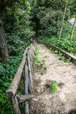Wooden stairs / path through the forest Stock Photos