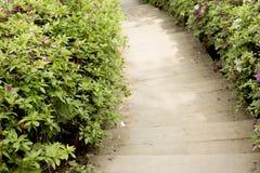Wooden stairs and royal azalea tree. Gunpo Flower Festival in Korea Stock Photography