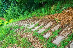 Wooden stairs to descend from the hill to the lake Peipsi. royalty free stock photos
