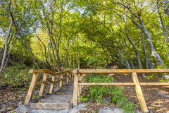 Wooden stairs on the tourist trail Royalty Free Stock Images