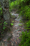 Wooden stairs on trail Royalty Free Stock Photography