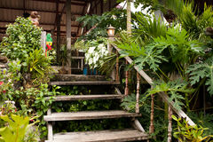 Wooden stairs. In tropical house Stock Photography
