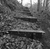Wooden Stairs In Woodland Royalty Free Stock Images