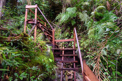 Wooden stairway on hike in Bako National Park Stock Photography