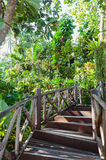 Wooden Stairway In The Jungle Royalty Free Stock Photography