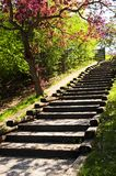 Wooden stairway in a park Royalty Free Stock Image