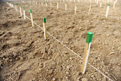 Wooden stakes Stock Image