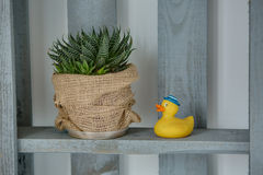 Wooden stand with plant and toy Stock Photos