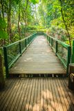 Wooden and steel bridge in between trekking trail in the tropica. L forest Royalty Free Stock Photo