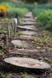 Wooden stepping stones in garden with vegetation around.