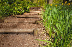 Wooden steps. In the forest Stock Photography
