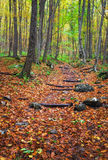 Wooden steps in autumn forest. Royalty Free Stock Photography
