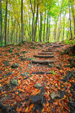 Wooden steps in autumn forest. Royalty Free Stock Images