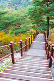 Wooden steps in forest Royalty Free Stock Photography