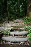 Wooden steps in the forest stock image