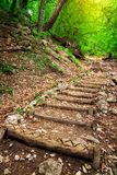 Wooden steps in forest. Stock Images