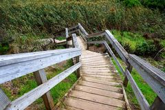 Wooden Steps on Nature Trail Royalty Free Stock Image