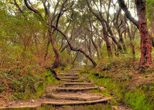 Wooden Steps in the rainforest Royalty Free Stock Photo