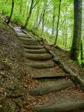 Wooden steps on the tourist trail in the spring in the forest stock photo