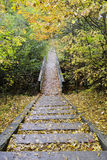 Wooden steps on the trail in the forest Stock Photography