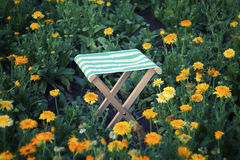 Wooden stool in a field of orange flowers Stock Photography