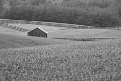 Wooden Storage Shed In Fenced Farm Field Black And White. Black and white landscape photo. Wooden building in fenced farm field, storage shed. Trees in Royalty Free Stock Photography