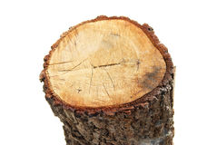 Wooden stump Stock Image