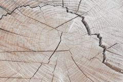 Wooden stump  background. Round cut down tree with annual rings as a wood texture. With a crack Royalty Free Stock Photo