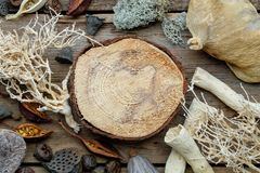 Wooden stump, dried roots, nut shell, coconuts, dry plants, eucalyptus, lotus seeds for floristic design. Wooden stump, dried roots, nut shell, coconuts, dry royalty free stock photography