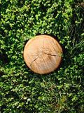 Wooden stump on a green clover background Royalty Free Stock Photos