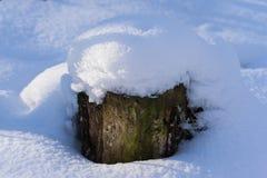 Wooden stump in snow Stock Photos