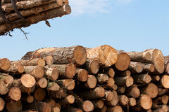Wooden stumps. Stacked for industry Royalty Free Stock Photo